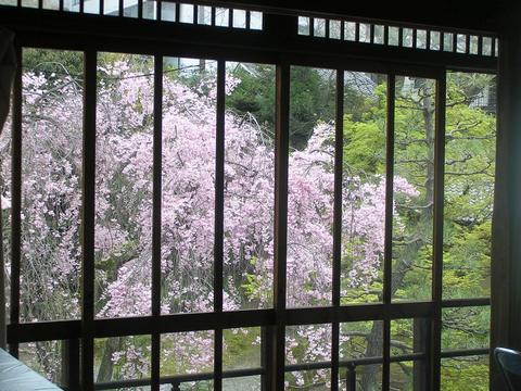 待合室から見る枝垂桜
