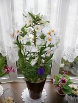 窓辺の花 1