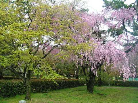 京都御所 春の一般公開