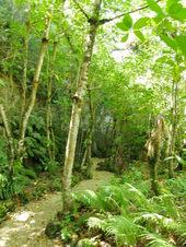 ジャングルツアー1