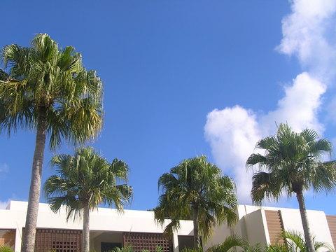 沖縄 夏の朝空