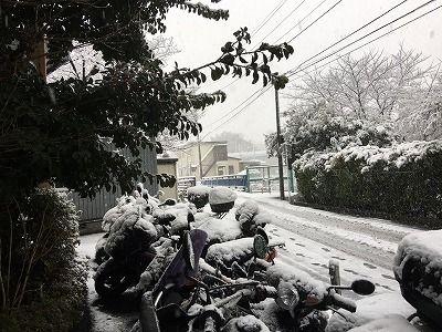 2018雪 (6)