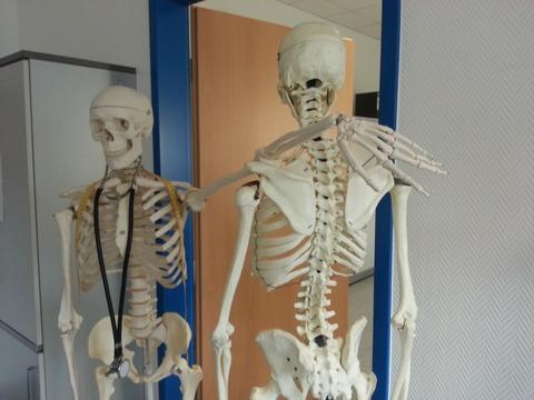 skeleton-645528_1920