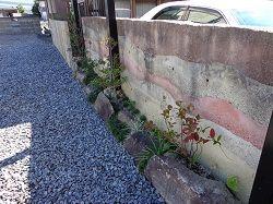 181009 土塀植栽.