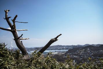 鍋島山の止まり木