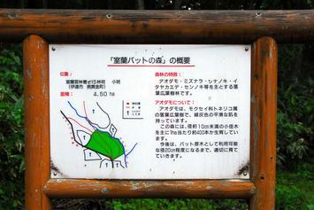 バットの森5