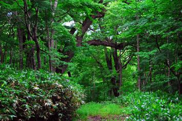 バットの森6