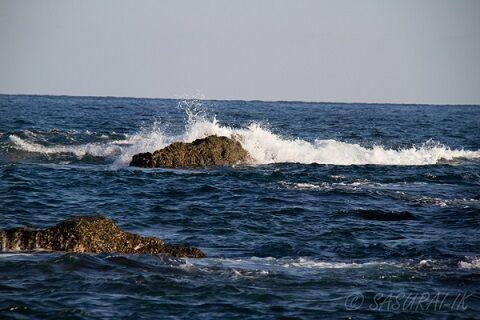 20201104 室戸岬 岩礁 E7D_5631-4 ブログ用