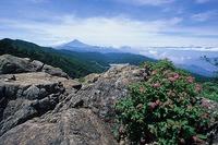 ヒュッテ資料_雷岩とシモツケ