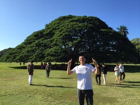 ハワイ巨大な木