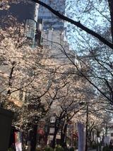 桜2IMG_2645
