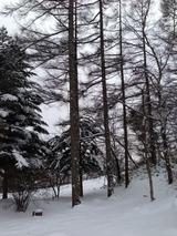 雪2写真-52