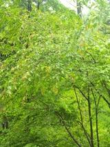 緑DSC_0773