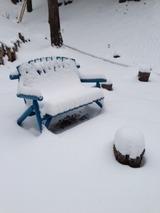 雪5写真-54