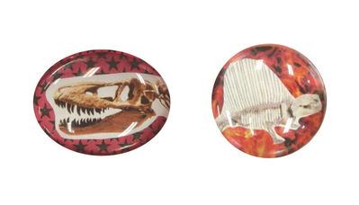 ぷっくり化石柄マグネット