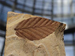 木の葉化石320