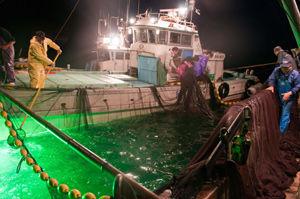光で魚を捕る漁業
