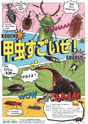 企画展「甲虫すごいぜ!」