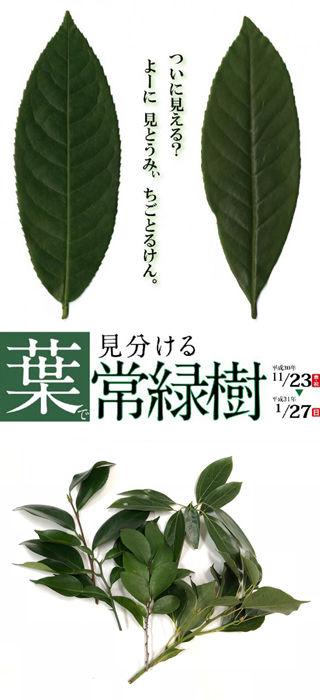 常緑樹画像320