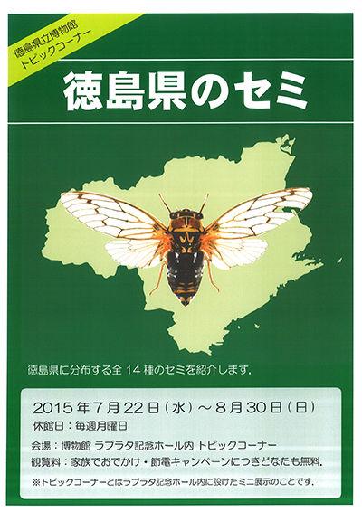 徳島県のセミ