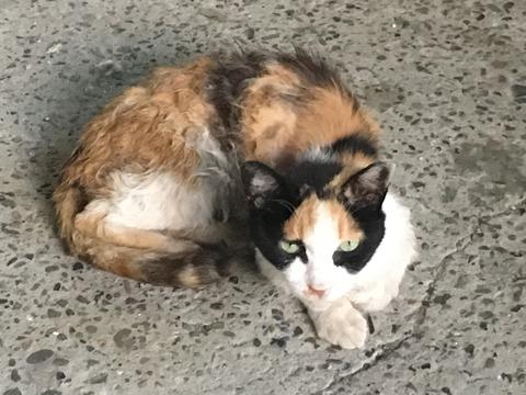 ほっかむり柄のネコとみずたま柄のブタ@新大塚