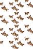 和風蝶の群れ