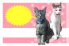 猫メッセージカード