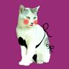 オカマ美女猫