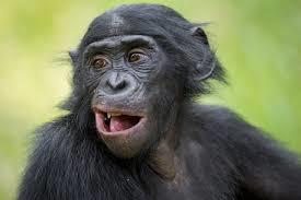 HIPHOPとかいう騒音を音楽だと思ってるチンパンジーは森に帰って下さい