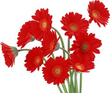 flower4821