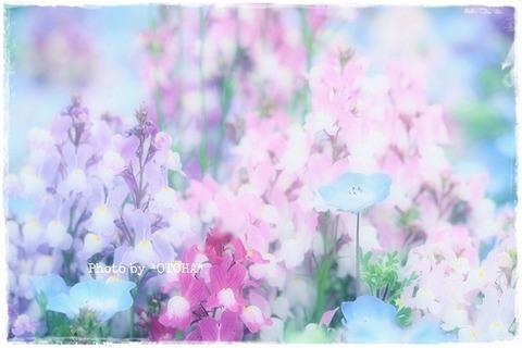 ☆☆☆P4100114