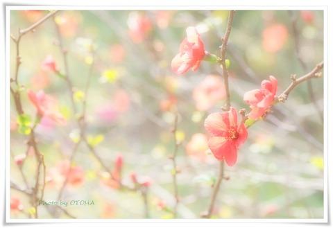☆☆P3074167