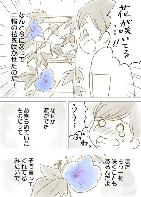 あさがお_002