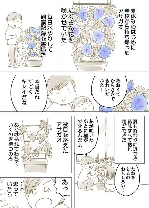 あさがお_001