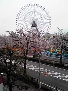 29.4.10.みなとみらい桜