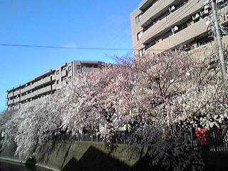 29.4.7.大岡川