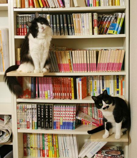 nekohon.jp - 猫とネコとふたつの本棚