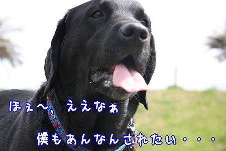 舌をだす犬