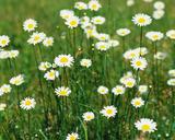 春の花〔白い花)