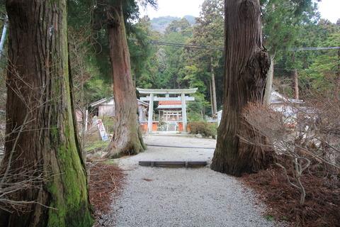 高天彦神社3大杉