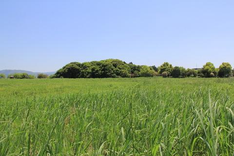 宇奈太理の森