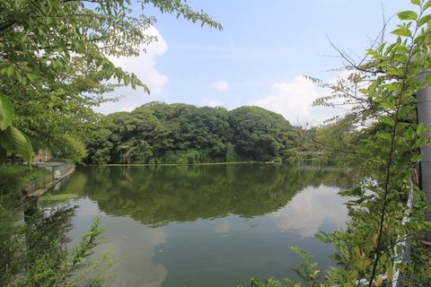 茶臼山古墳1