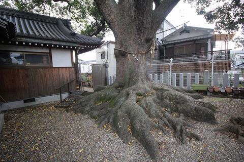 阿保神社の楠
