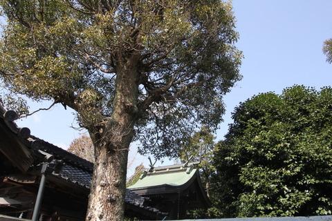 調田坐一言尼古神社5