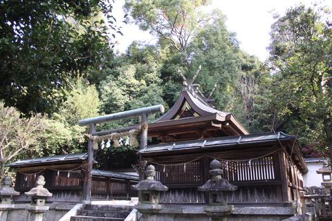 伊射奈岐神社6