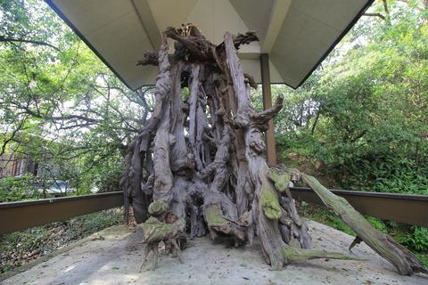 玉津島神社4