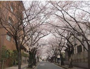 箕面桜通り1