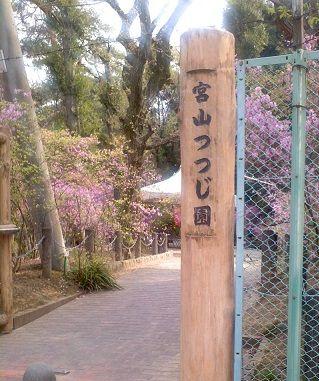 宮山つつじ園 (6)