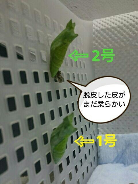 [画像:077e7360.jpg]