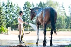 「菜七子ルール」 女性騎手の斤量が軽くなるともっと勝てる?